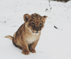 animal, cute, and snow image