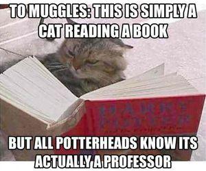 harry potter, cat, and book image