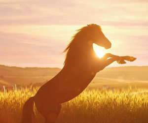 equestrian, nature, and horsemanship image