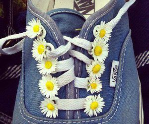 blue, daisies, and flowers image