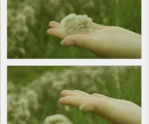 hand and nature image