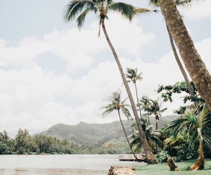 beach, place, and tropical image