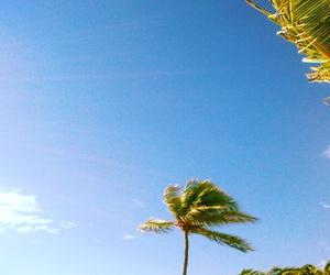 palmtrees, travel, and puntacana image