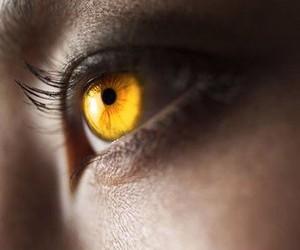 eye, gold, and eyes image