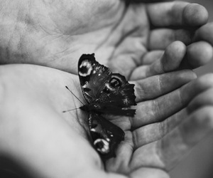 beautiful, black and white, and butterflies image
