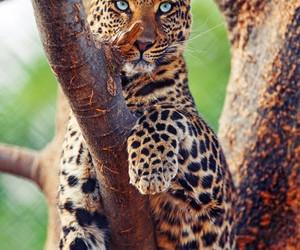 animal, sweet, and tiger image
