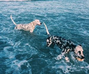 dog, summer, and animal image