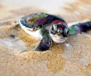 turtle, beach, and sand image