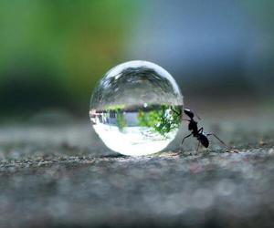 amazing, ants, and rain image