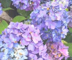 beautiful, pretty, and blue image