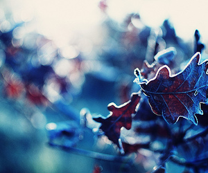 leaves, cold, and frost image