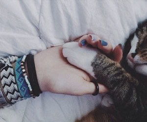 cat hand love cute bed image