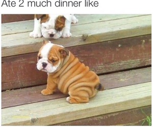 adorable, food, and puppy image