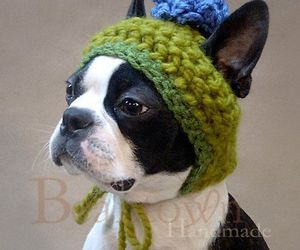 dog, hat, and boston terrier image