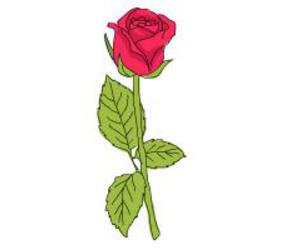 drawing, draw rose, and haw to draw image