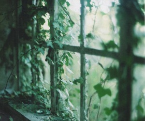 green, window, and nature image