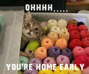 animals, cats, and funny image
