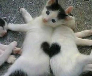 cat, cats, and cute image