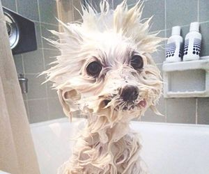 dog, bath, and funny image