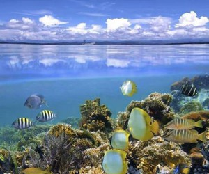 Fisch, fish, and sea image