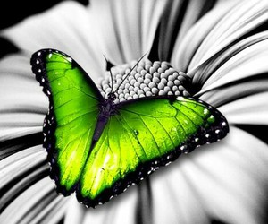 butterfly, green, and lime image