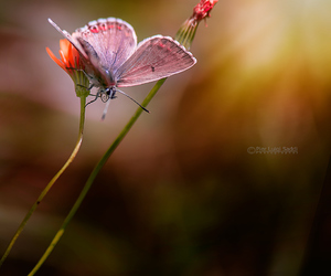 butterfly, insects, and flowers image
