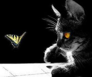 cat and butterfly image