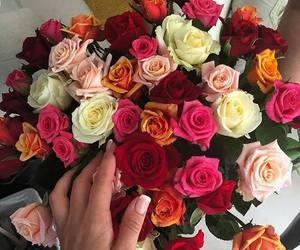colorful, red, and roses image