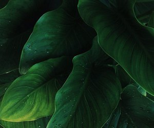 green, leaves, and nature image