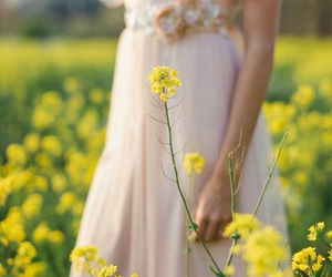 fairytale, flowers, and nature image