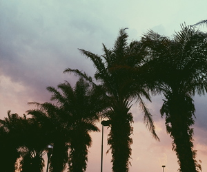 beautiful, colors, and palmtrees image