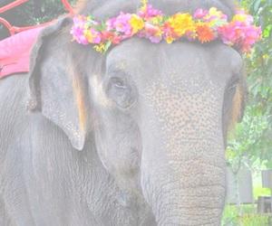 elephant, animal, and flowers image