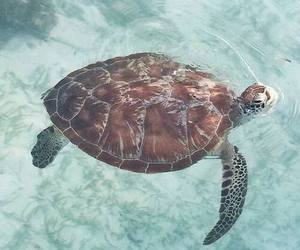 animal, summer, and turtle image