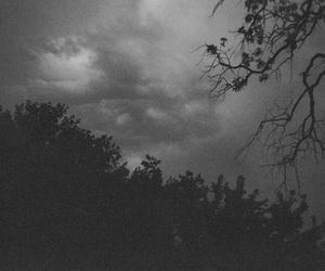 tree and dark image