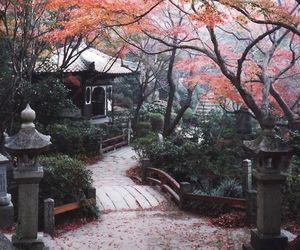 japan, tree, and sakura image