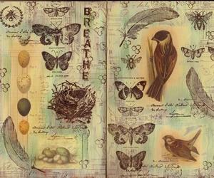 art, bird, and book image