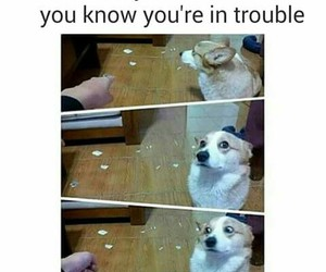 funny, dog, and trouble image