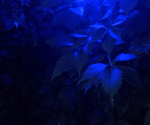 blue, light, and blurry image