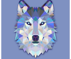 wolf, animal, and blue image