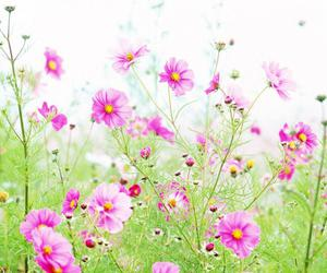 flowers and vyer image