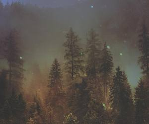 alternative, art, and forest image