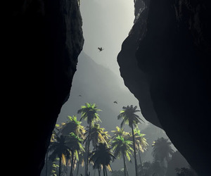 nature, palms, and photography image
