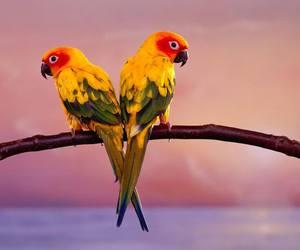 birds, heart, and heart shape image