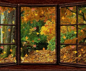 autumn, gif, and leaves image