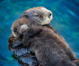 animal, otter, and adorable image