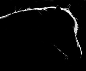 black and white, edit, and horse image