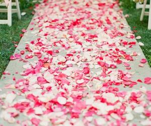 petals, rose, and wedding image