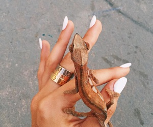 nails and animal image