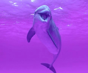 dolphin, pink, and animal image