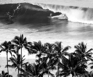palms, beach, and sea image